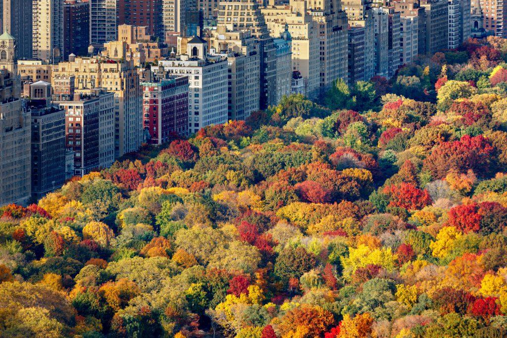Jesienne kolory liści Central Park późnym popołudniem. Widok z lotu ptaka w kierunku Central Parku West. Upper West Side, Manhattan, Nowy Jork