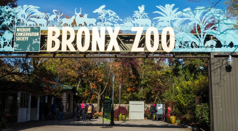 zoo Nowy Jork